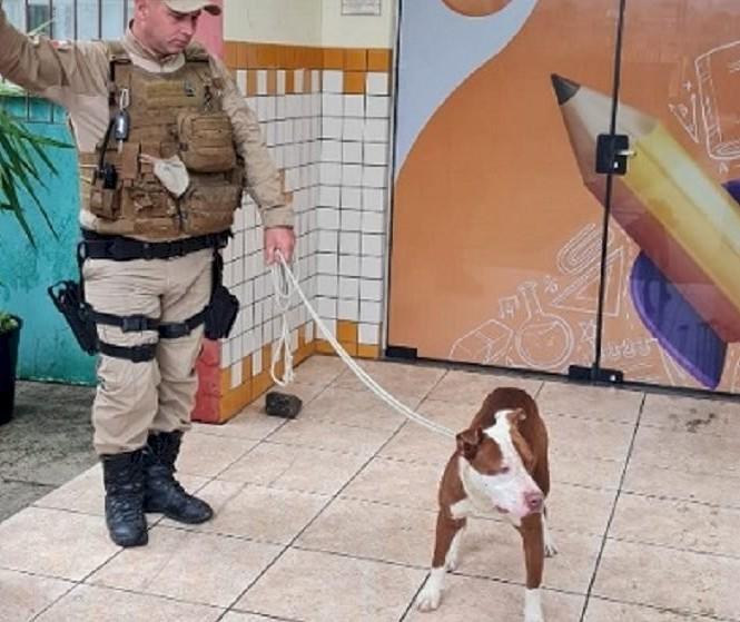 Pitbull invade escola e ataca estudantes