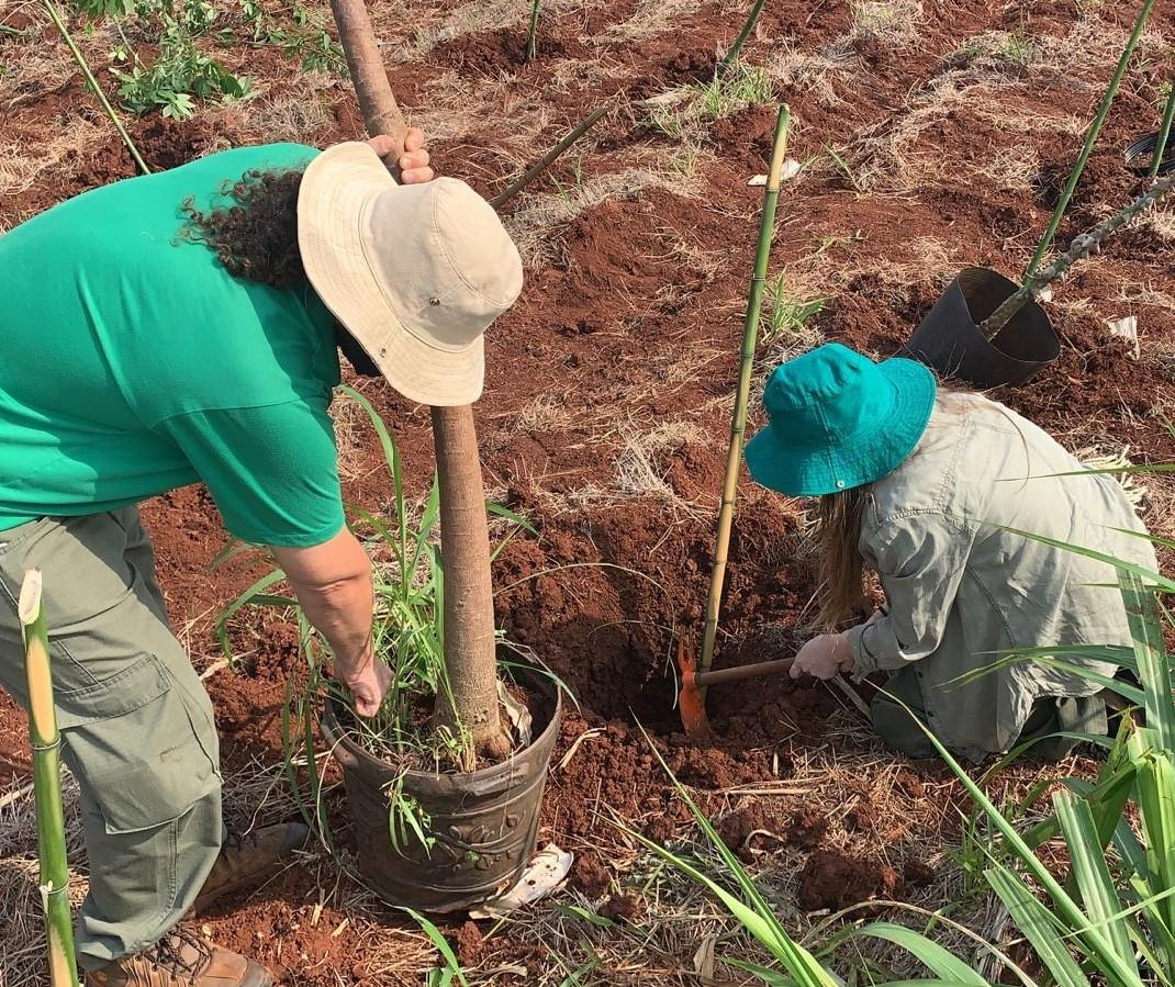 Plantio de 200 mudas nativas vai ajudar a recuperar o fundo de vale do córrego Mandacaru