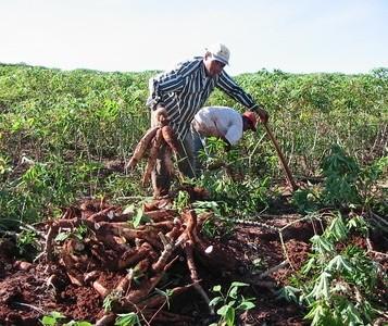 Chuva diminui, mas ainda prejudica os trabalhos no campo