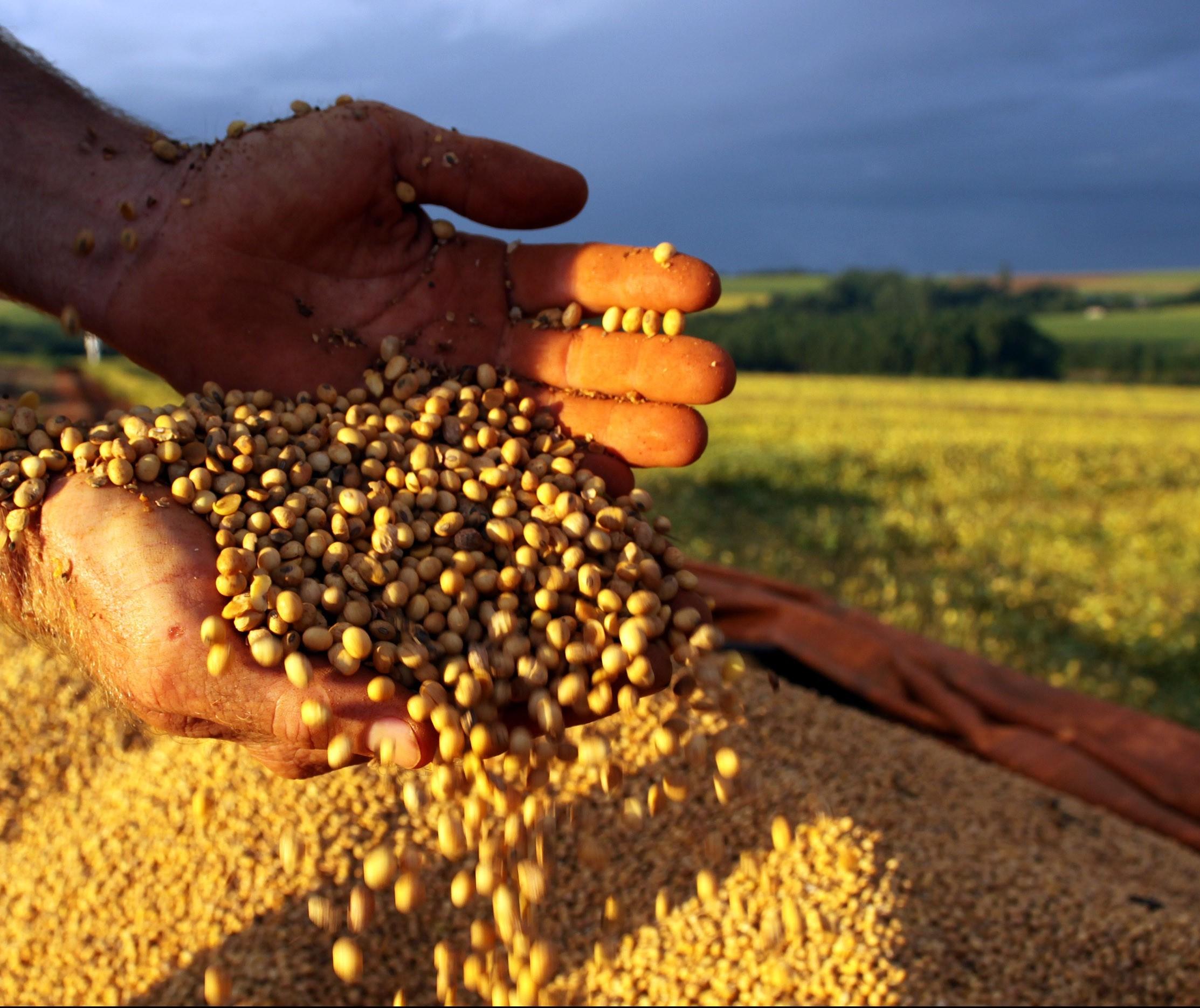 Preços agrícolas se mantêm em alta em Maringá