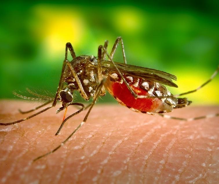 Número de casos positivos de dengue no Paraná sobe para 636