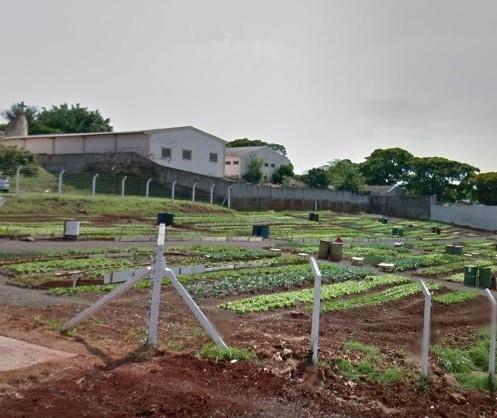 Ladrões invadem horta comunitária três dias seguidos em Maringá