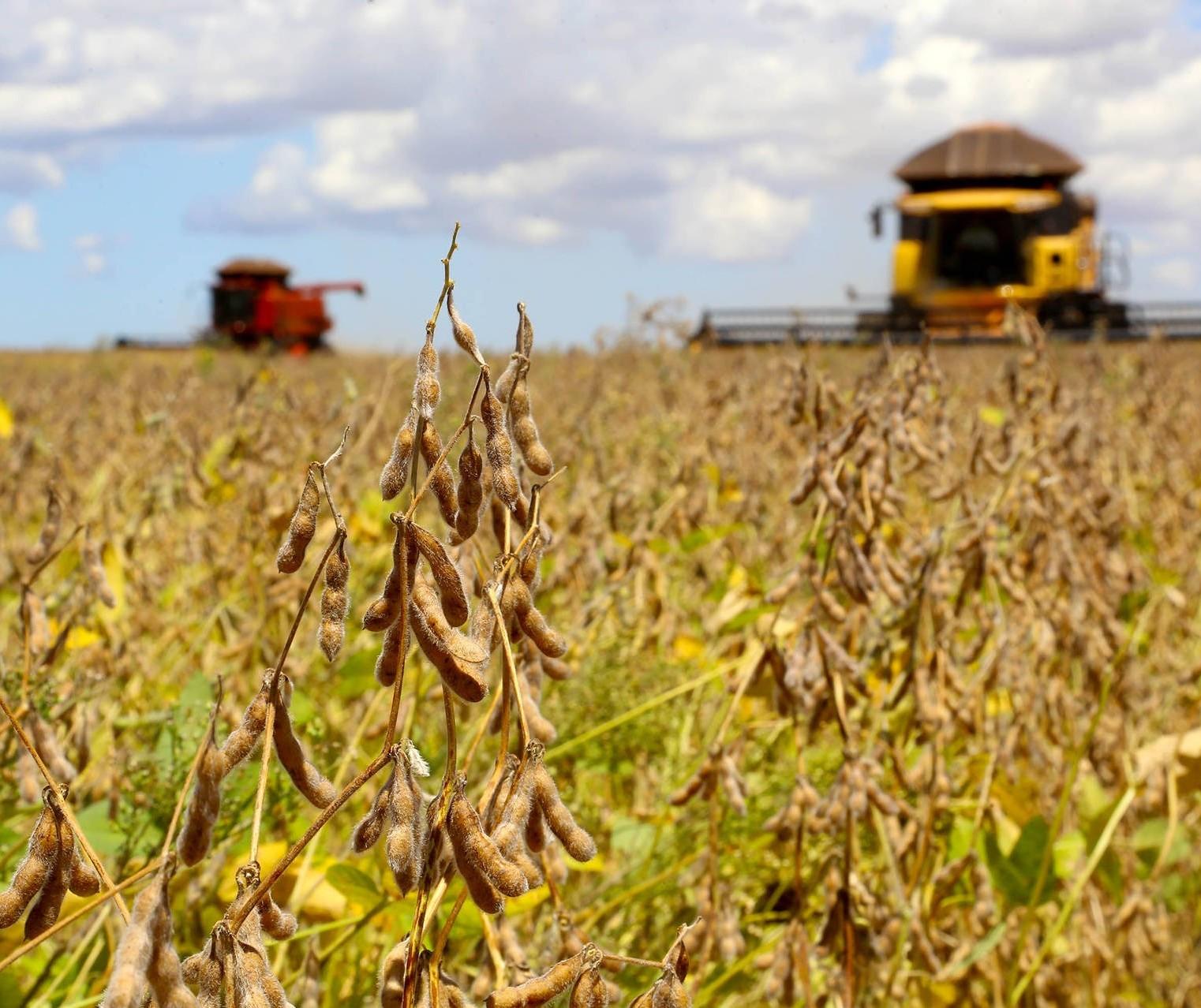 Plantio da soja atinge 60% da área projetada no Paraná