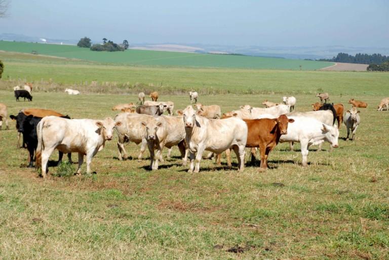 Abate de bovinos chega a 6,5 mi de cabeças no 1º trimestre