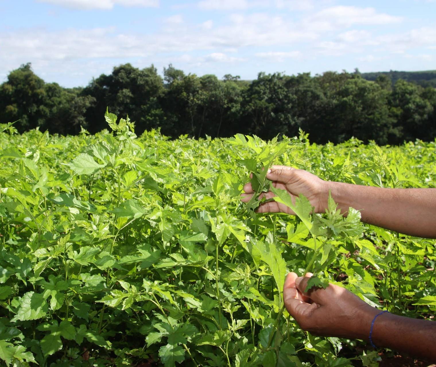 Área tratada com defensivos agrícolas cresceu 12,3% no segundo trimestre