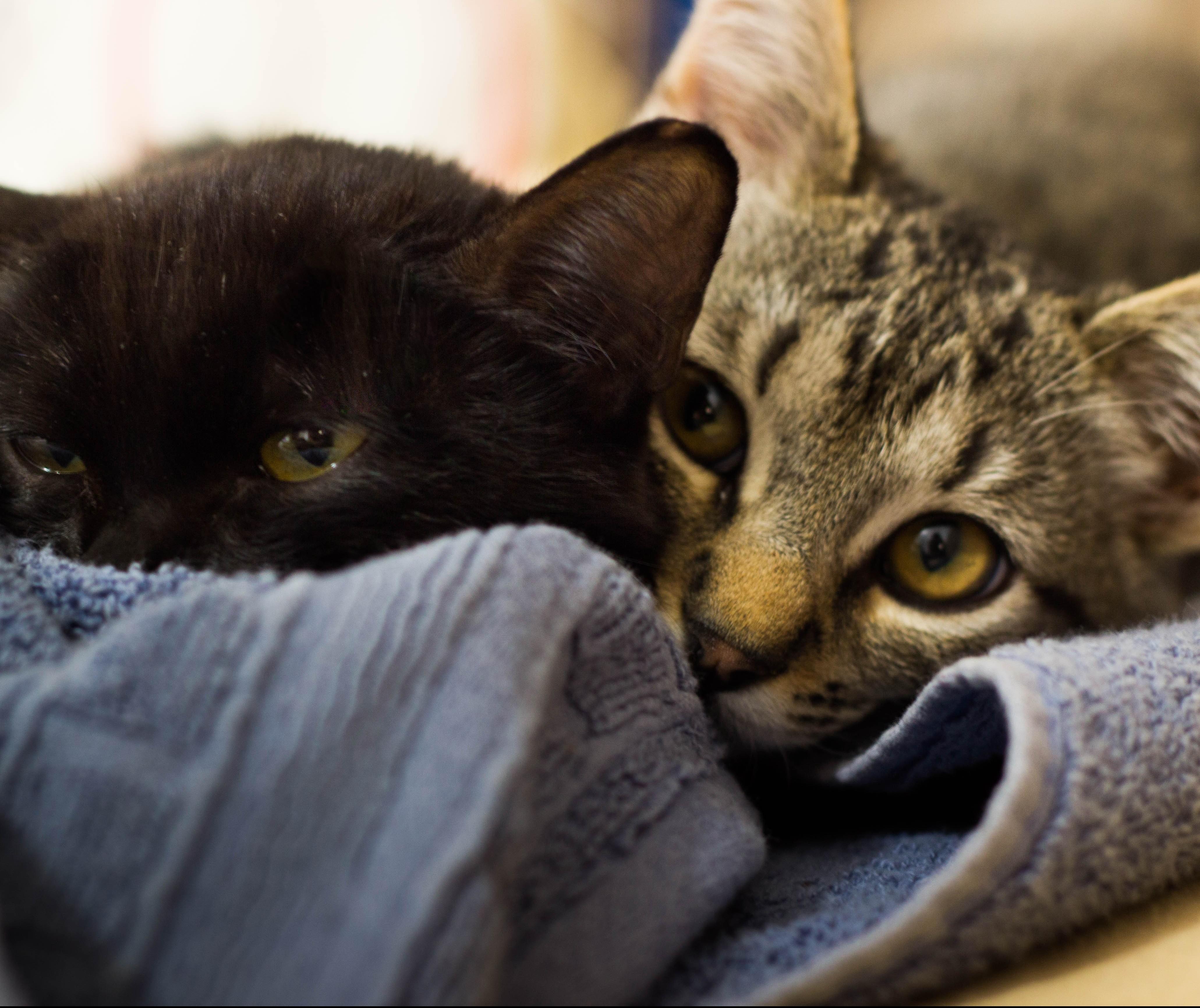 Cadelas e gatas também têm câncer de mama