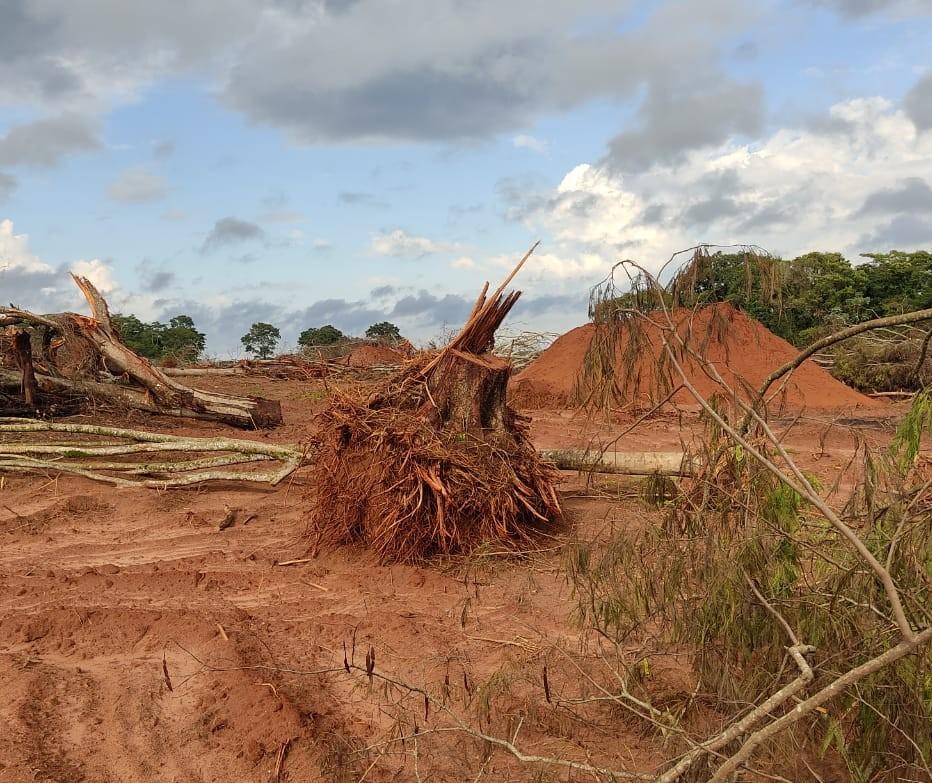 IAT identifica área de desmatamento e multa propriedade em mais de R$ 180 mil