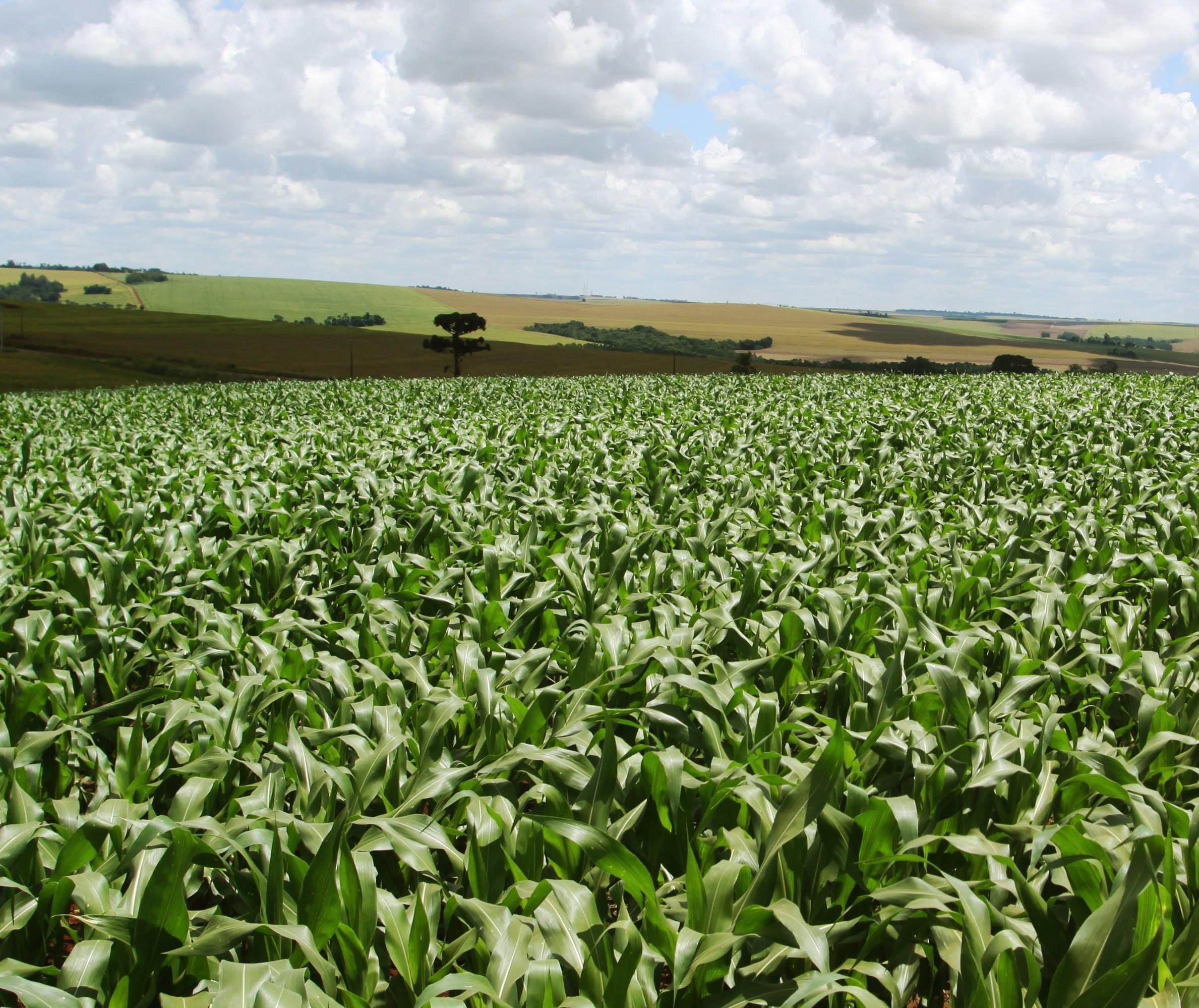 Produtor com endividamento bancário pode solicitar prorrogação do contrato de crédito rural