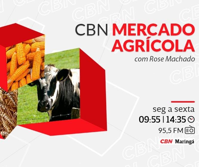 Vaca gorda custa R$ 1 a arroba em Londrina