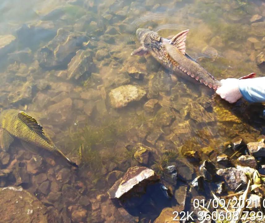 Três são presos em flagrante por pesca predatória no Rio Ivaí