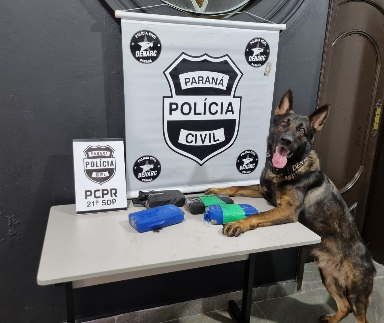 Com auxílio do cão farejador, Denarc apreende crack em fundo falso de veículo