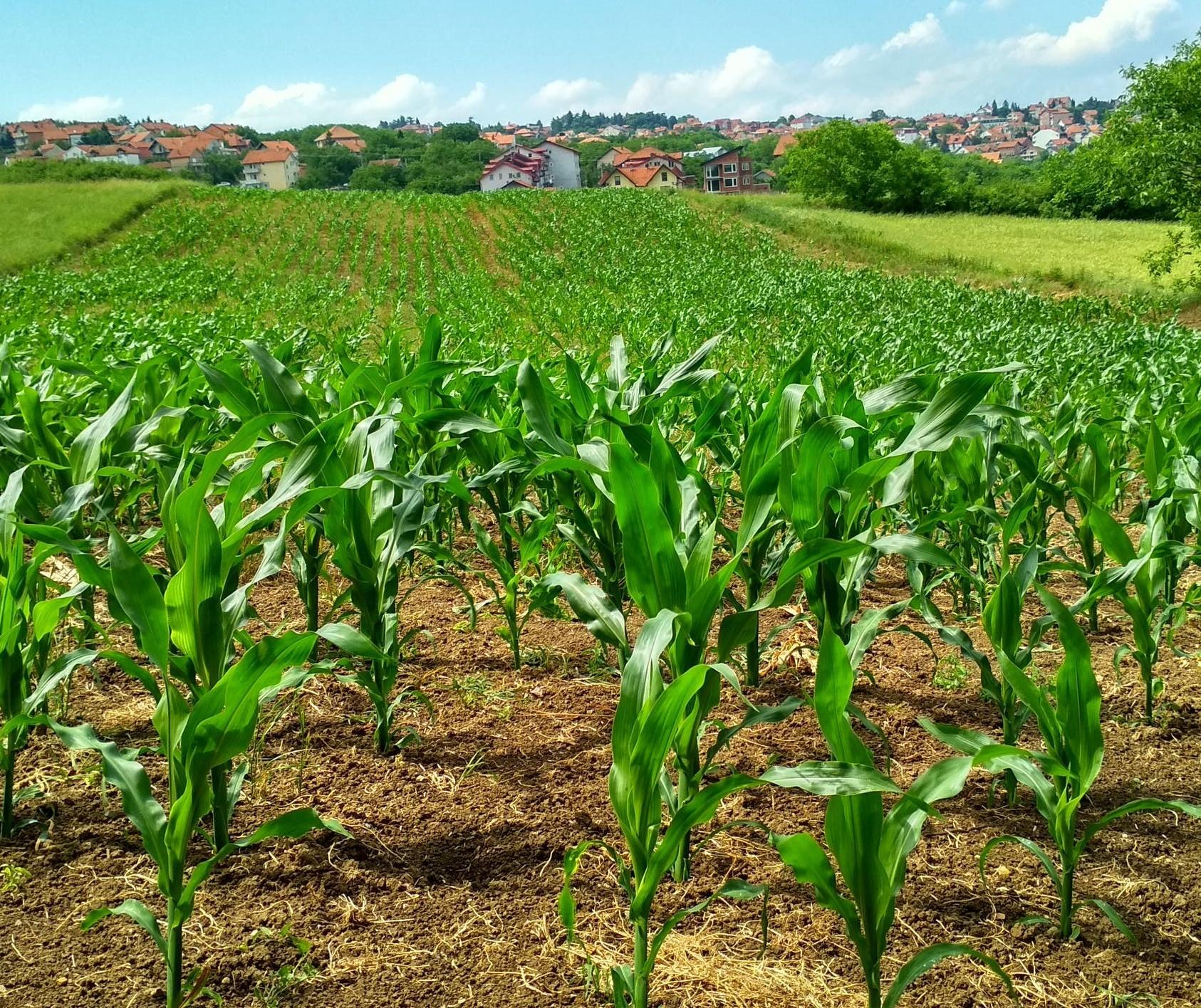 Coronavírus: efeitos no agronegócio