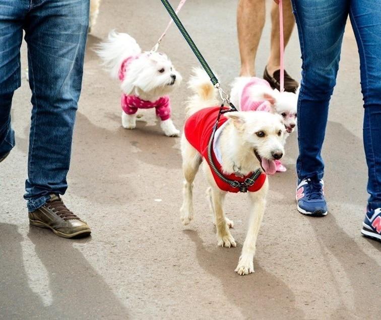 Pet Day Cãominhada ocorre neste domingo (26)