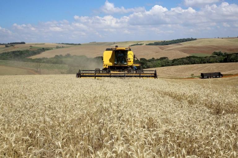 Tecnologia aplicada ao campo beneficia cultivo do trigo