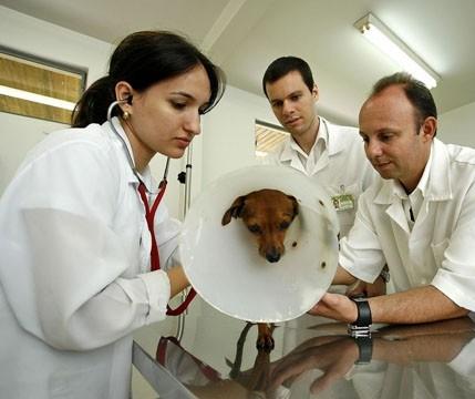 Ao contrário do que disse MP, UEM afirma que nunca praticou eutanásia de animais