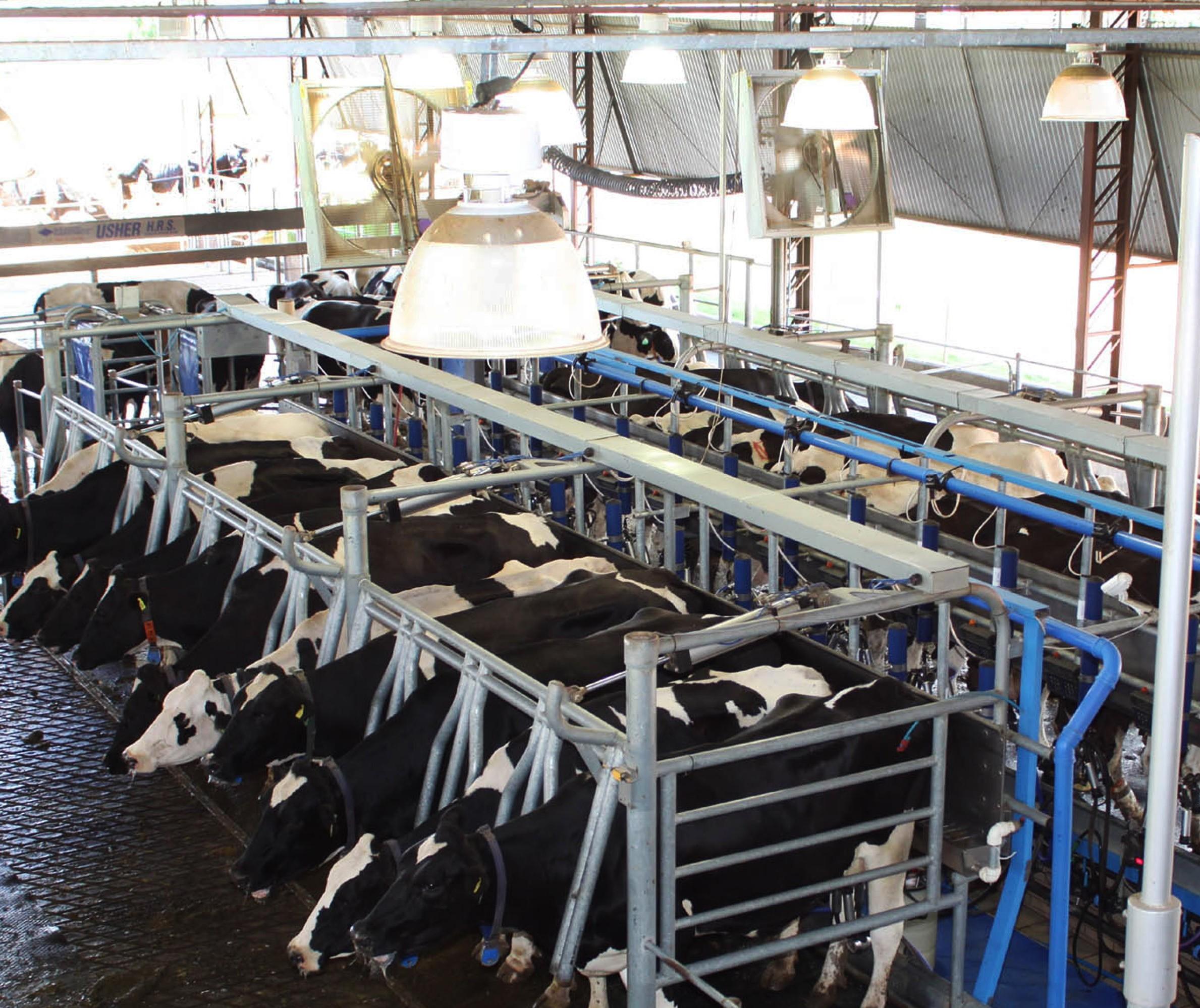 Produtores de leite relatam que indústrias não estão honrando valores estabelecidos pelo Conseleite