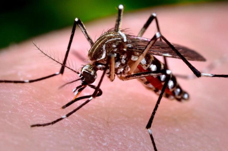 Sobe para 101 o número de casos confirmados de dengue em Maringá