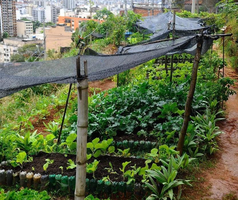 Hortas comunitárias de Maringá voltam a atender o público