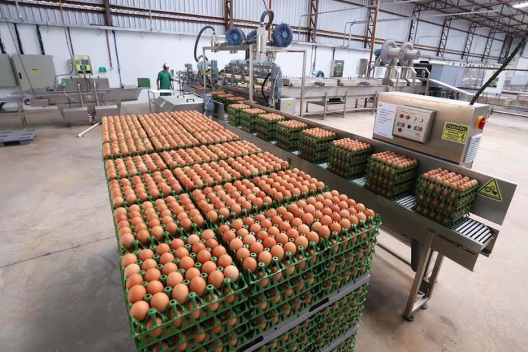 Indústria de alimentos cresceu acima do esperado