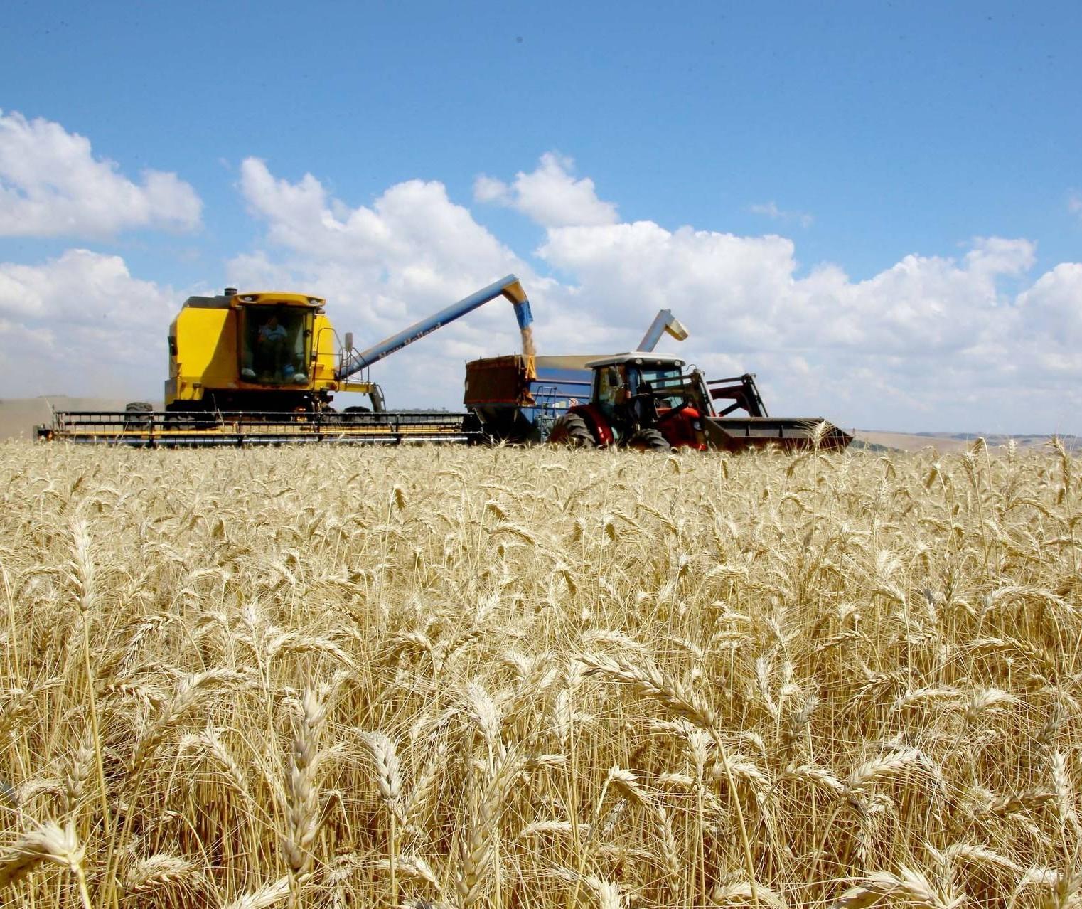 Exportações do agronegócio atingem US$ 11,3 bi em julho e batem recorde