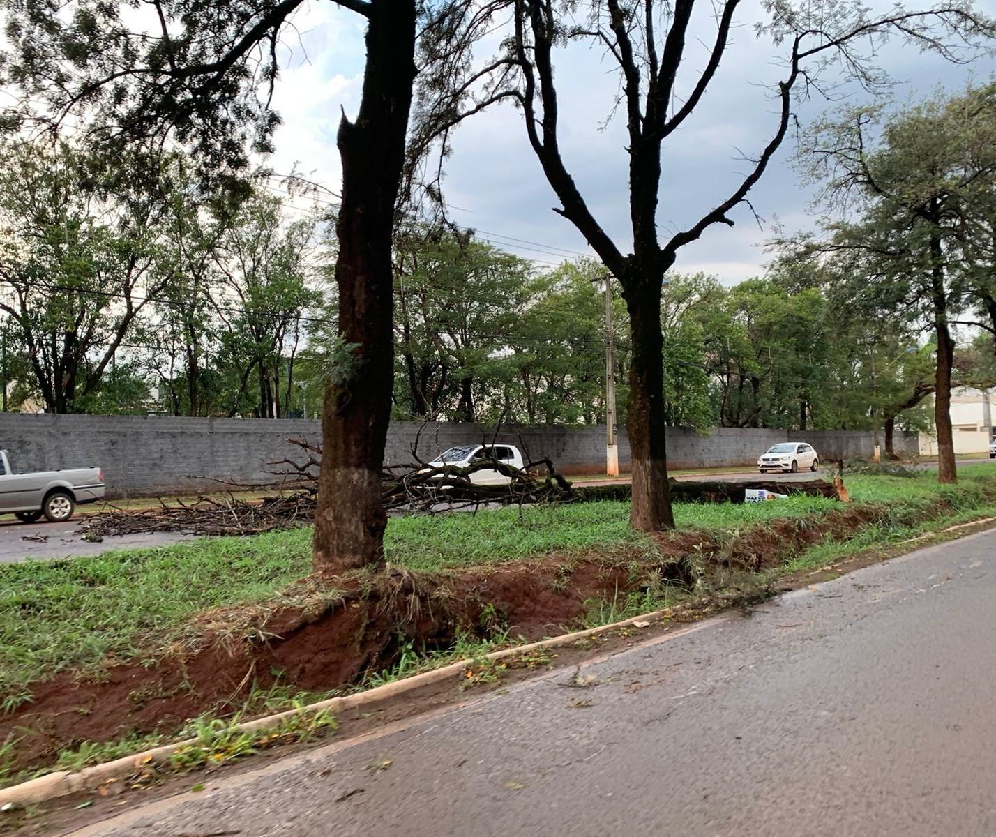 Número de árvores caídas se aproxima de 145 e deve aumentar