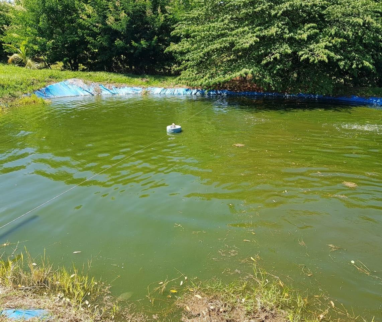 Criança de 5 anos morre afogada em tanque de peixes