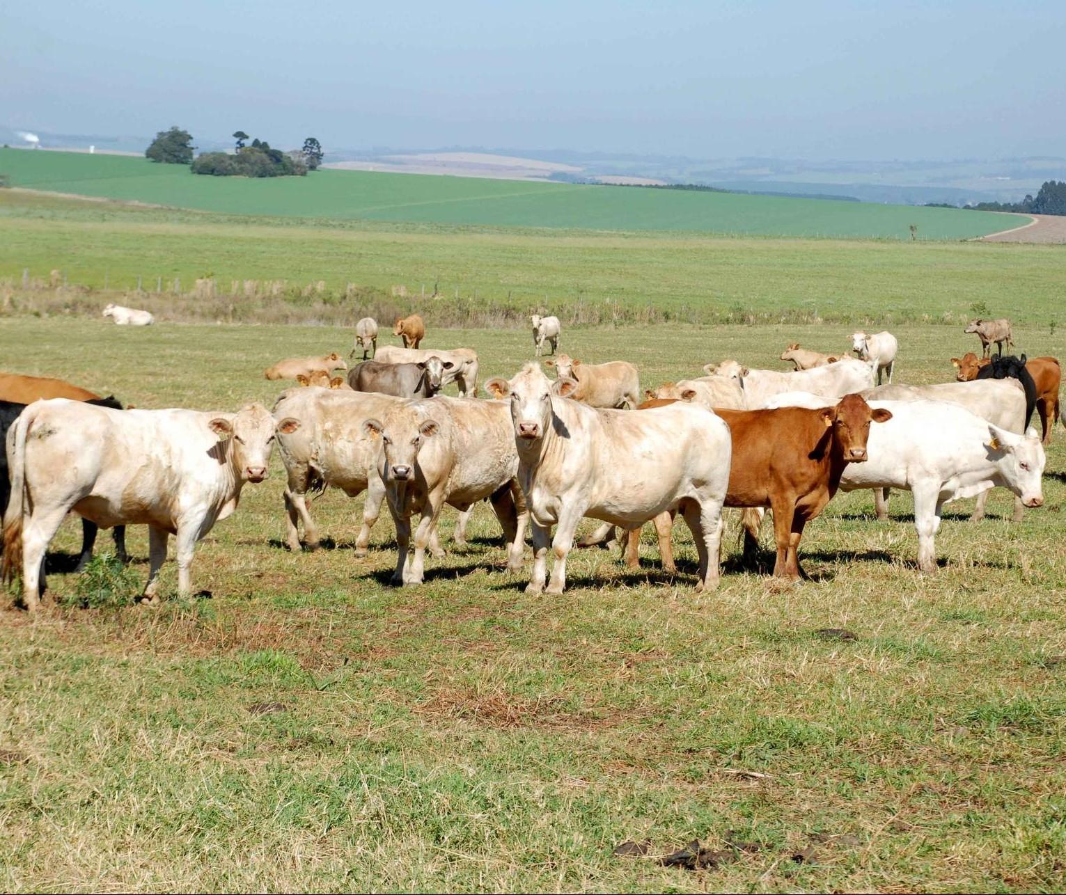 Adapar registra focos de raiva em bovinos, em Porto Rico e Tapira