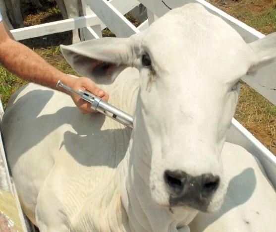 Retirada da vacina contra a febre aftosa no Paraná ocasiona vantagens ao produtor