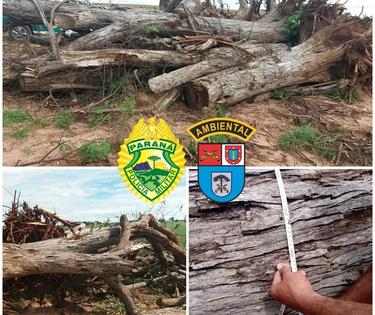 Homem é multado em R$ 12 mil por derrubar 23 árvores nativas