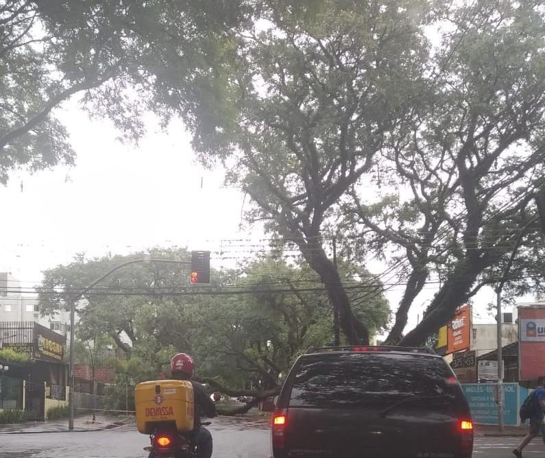 12 árvores caíram em Maringá por conta da chuva