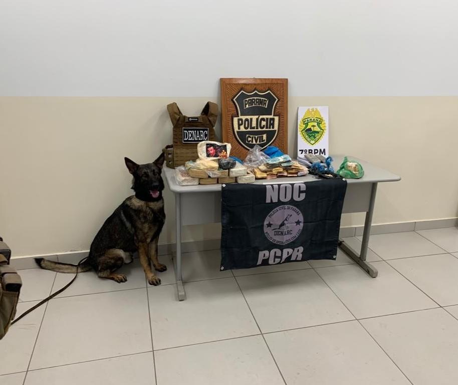 Denarc Maringá estreia o NOC, o Núcleo de Operações com Cães