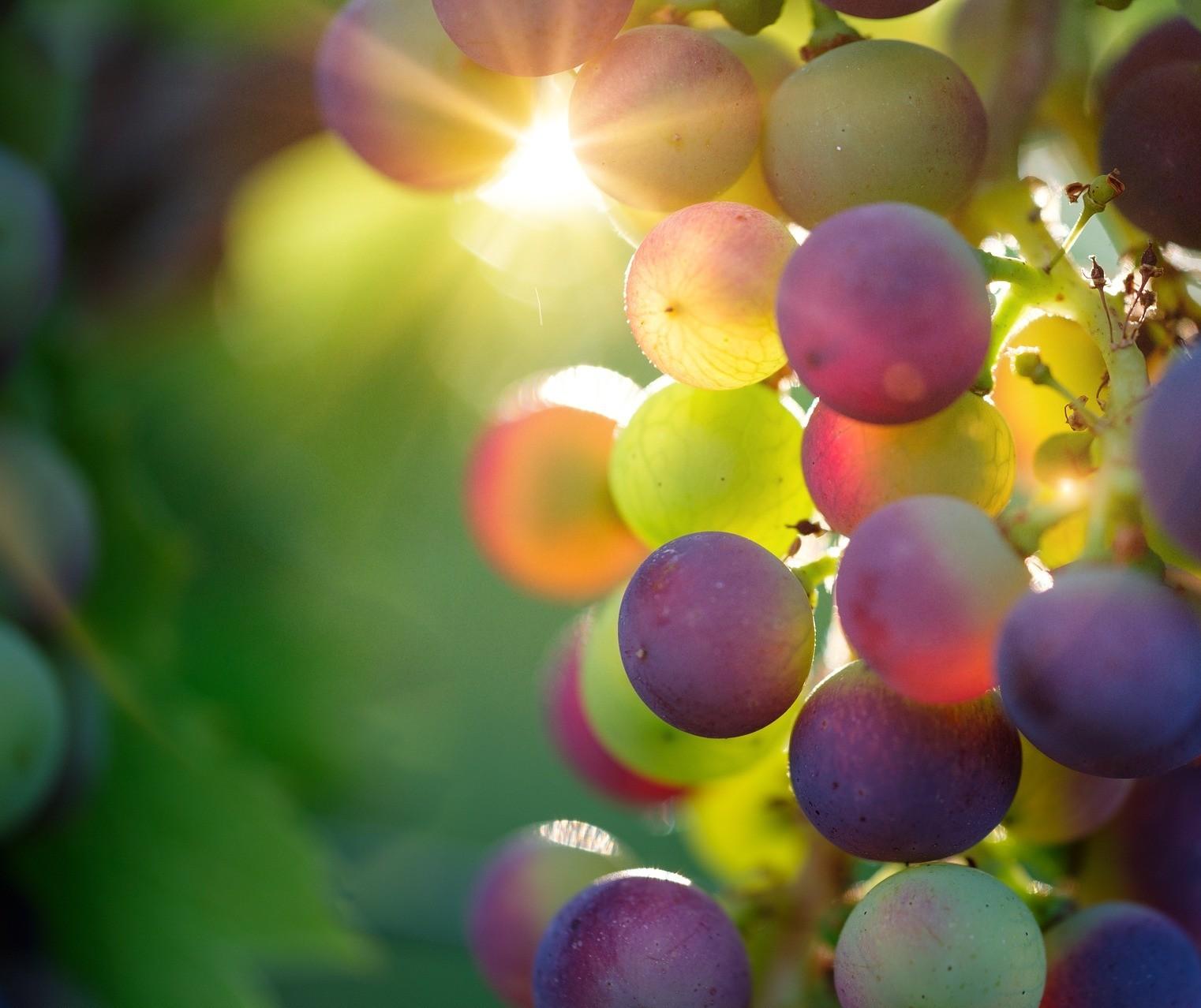 A região não garante a qualidade do vinho