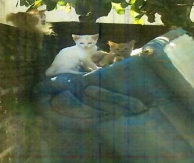 Mulher abandona seis gatos em Maringá e é multada
