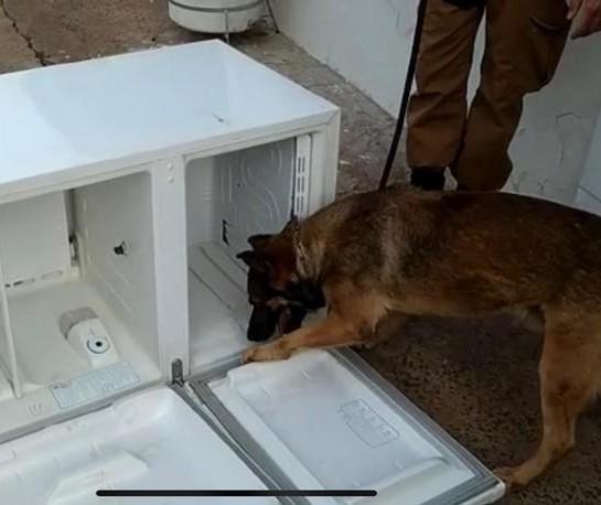 Presos compram geladeiras e eletrodomésticos chegam cheios de drogas em Cianorte; vídeo