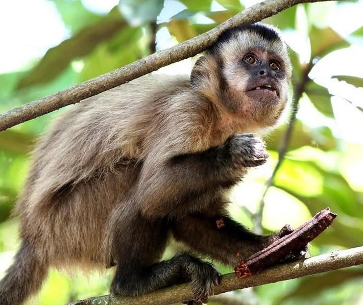 Macacos mortos em Maringá não estavam com febre amarela