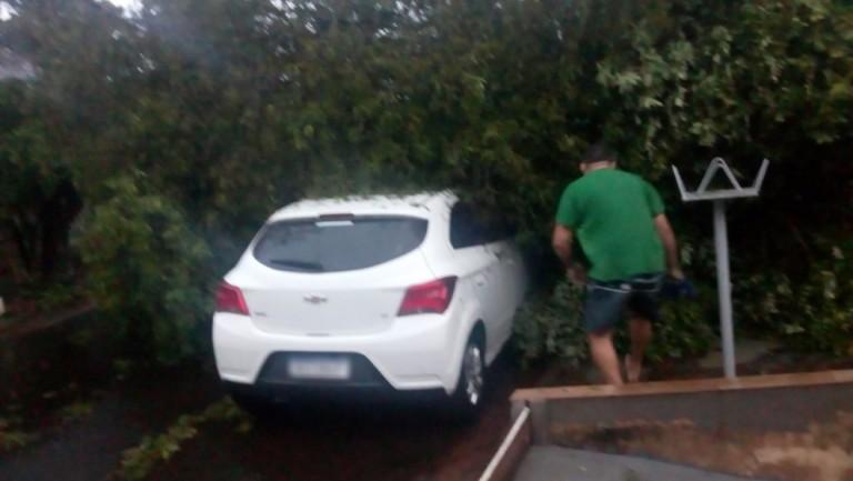 Temporal derruba árvores e destelha casas em Maringá