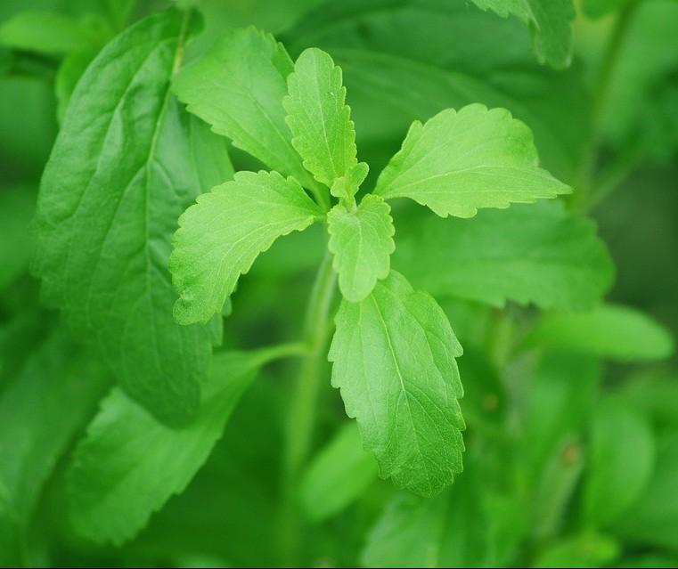 Você consome adoçante de stevia?
