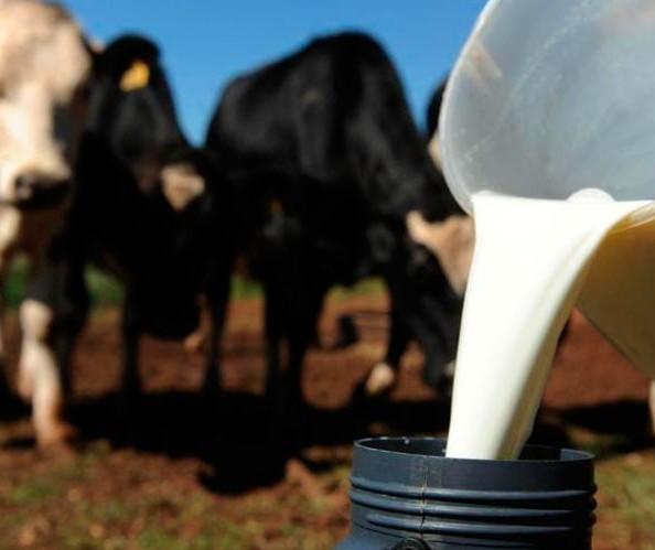 Leite: preço pago ao produtor está estável no Paraná