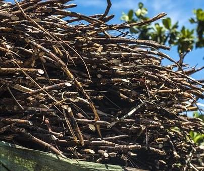 Consecana divulga os preços da cana-de-açúcar para outubro