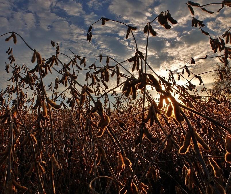Especialista fala sobre desafios prioritários para o agronegócio nos próximos anos