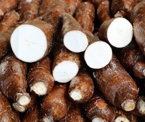 Raiz de mandioca custa R$ 390 a tonelada em Campo Mourão