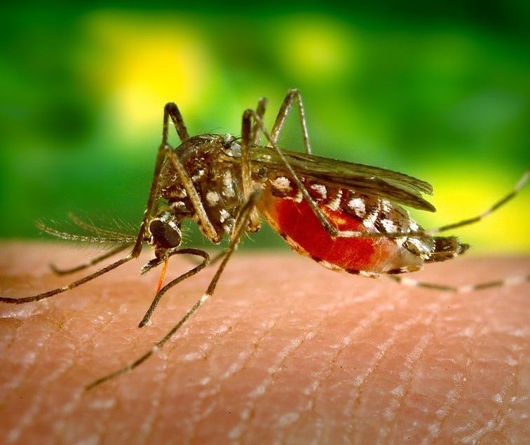 Maringá permanece com 153 casos de dengue confirmados