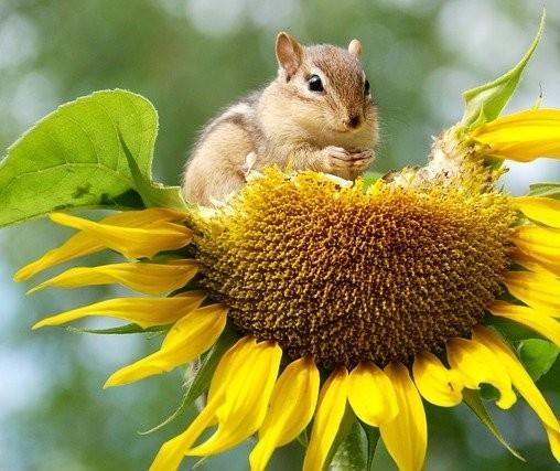 Vamos falar sobre... biodiversidade