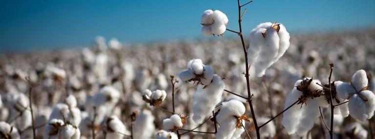 Negociações envolvendo algodão em pluma seguem lentas no mercado spot