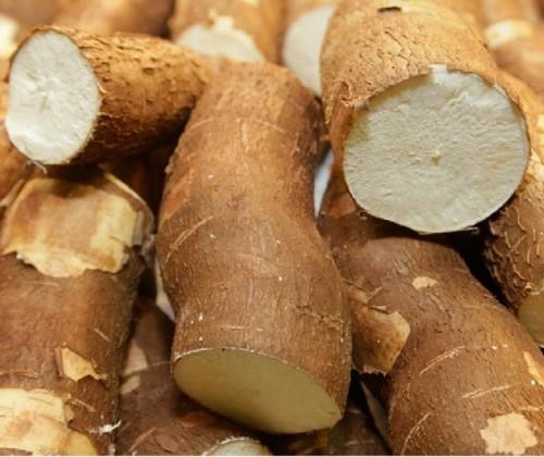 Tonelada da raiz de mandioca custa R$ 475 na região de Umuarama