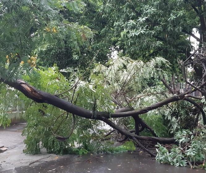 Chuva volumosa e vento forte derrubam 3 árvores e danificam postes
