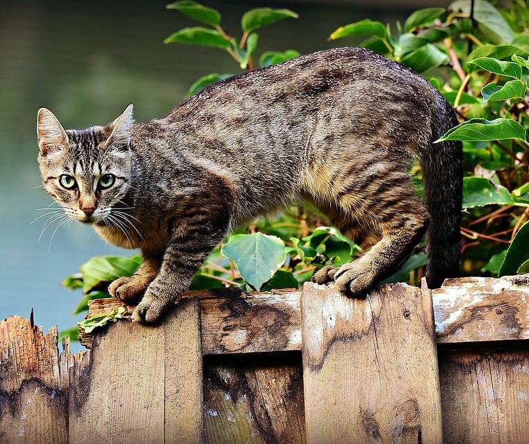 Programa de castração de felinos começou esta semana