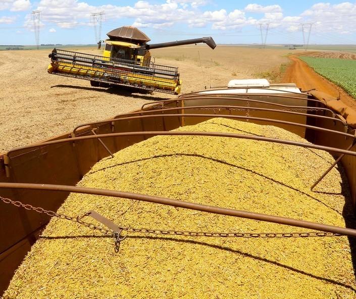 Comecialização da soja brasileira avança pouco em junho