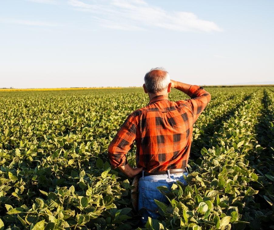 73% dos produtores do país não tem mais do que o ensino fundamental, diz IBGE