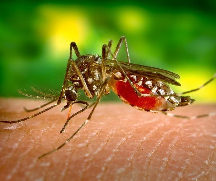 Número de casos confirmados de dengue sobe para 507 no Paraná